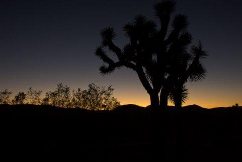 joshua-tree-sunrise.jpg